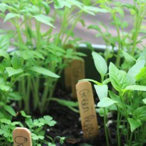 Sunny Side Up & Grow Gardens