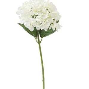 White Hydrangea Stem